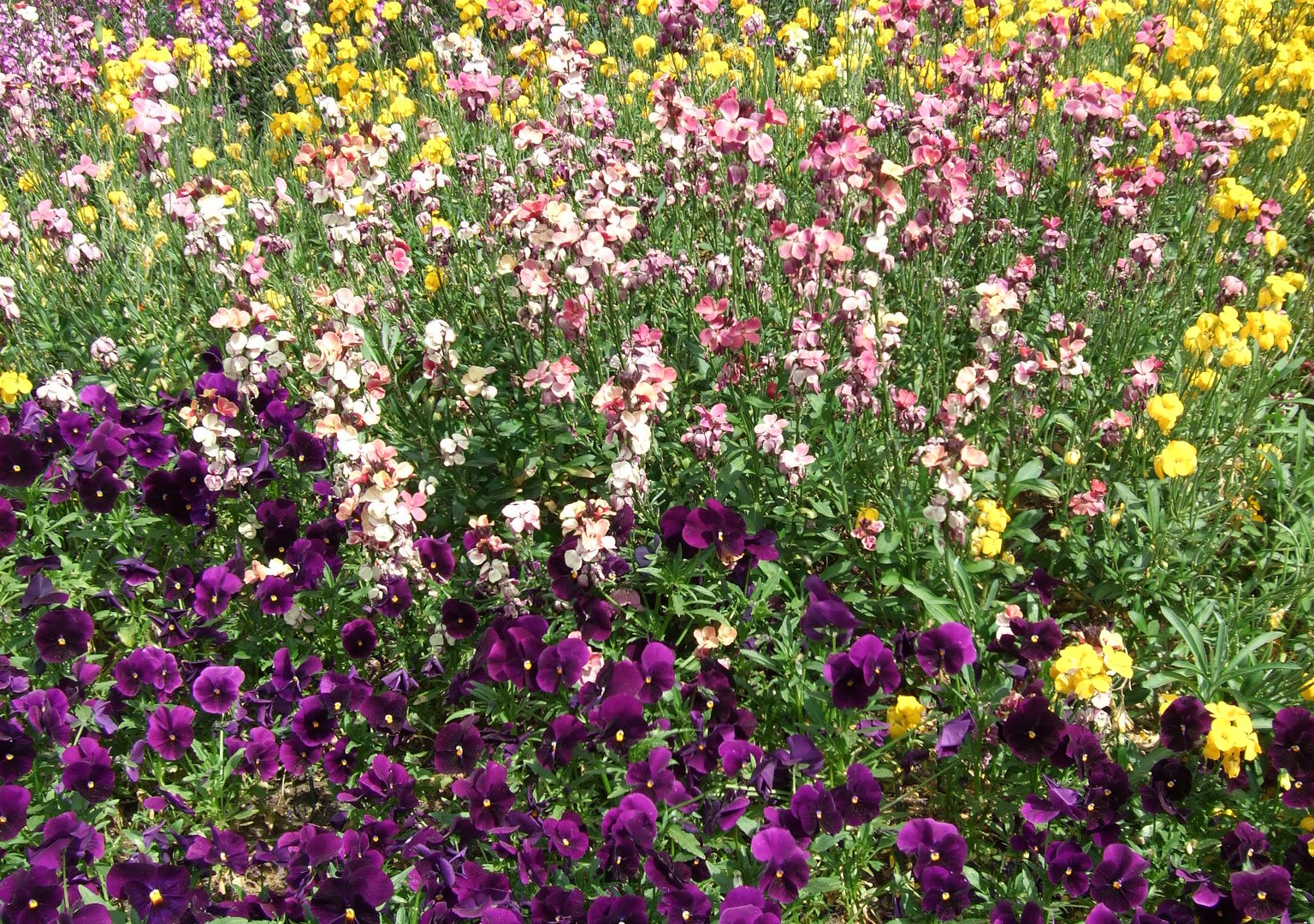 Flowers in Hyde Park, London England